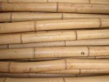 Bambusová tyč  průměr 8-10 cm, délka 2 metry vzhledové vady